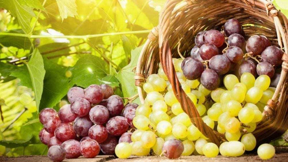 raisin bienfaits